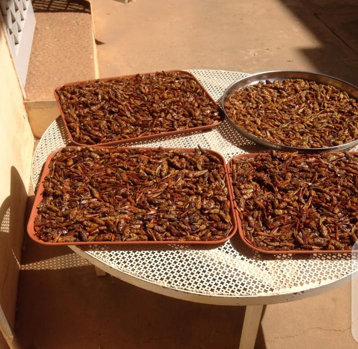 Vente de criquets frits: une activité qui a le vent en poupe et qui se conjugue au féminin