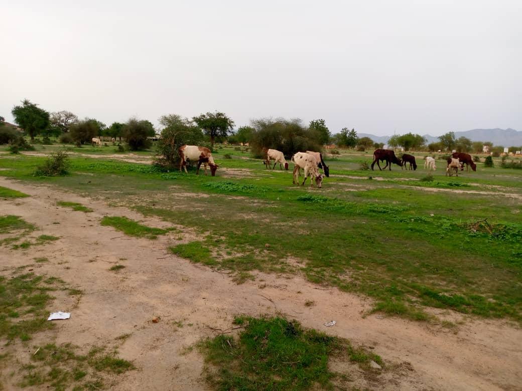 Guéra : une vague d'arrestation dans le département d'Abtouyour, suite à un conflit foncier